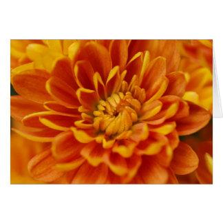 Orange Chrysanthemum Hälsningskort