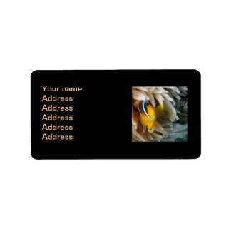 Orange clownfisk adressetikett