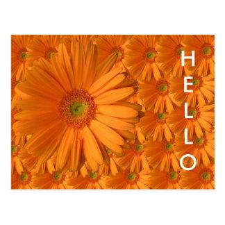 Orange Gerber daisy Vykort