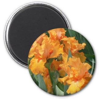 Orange Irises Magnet