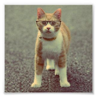Orange katt med exponeringsglas fototryck
