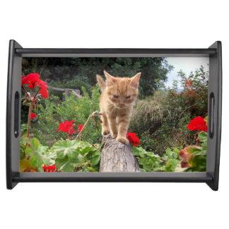 Orange kattungeträdgårdmagasin serveringsbricka