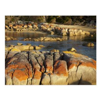 Orange lav på stenar, Binalong fjärd, fjärd av Vykort