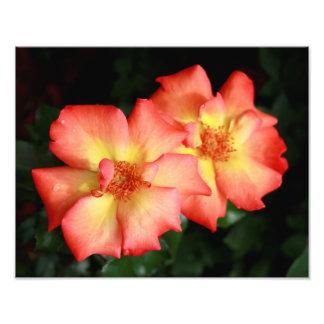 Orange och hybrid- Tearo för gult Fototryck
