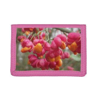Orange och rosa WahooBush bär