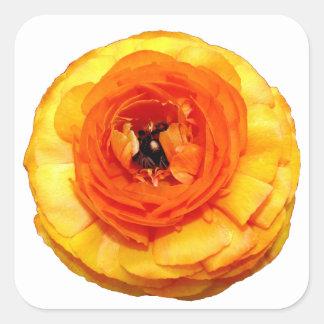Orange Ranunculus Fyrkantigt Klistermärke