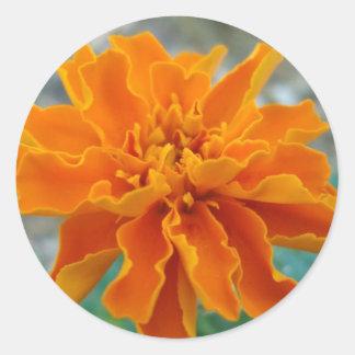 Orange ringblomma runt klistermärke