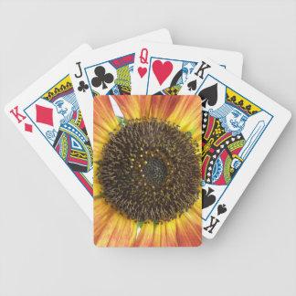 Orange solros som leker kort spelkort