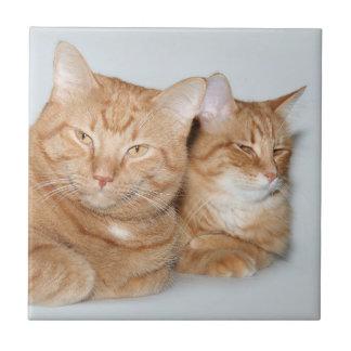 Orange tabbies belägger med tegel kakelplatta