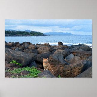 Orange tabby katt, Kauai, Hawaii Poster