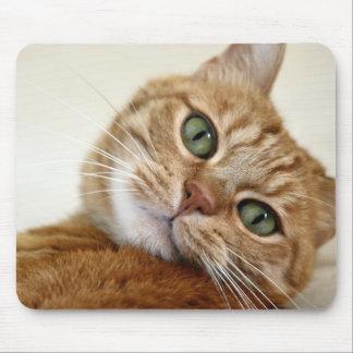 Orange tabby katt med gröna ögon musmatta