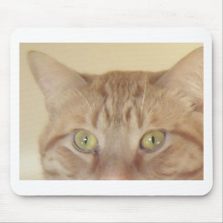 Orange tabby katt musmatta