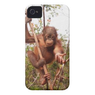 Orangutan för djurlivräddingMason iPhone 4 Case-Mate Fodraler