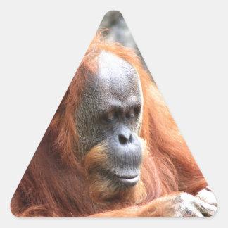 Orangutan Triangelformat Klistermärke