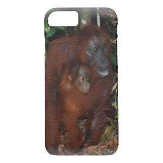 Orangutans fostrar och behandla som ett barn