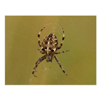 Orb-vävare spindel vykort