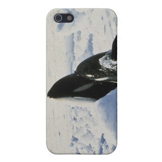 orca iPhone 5 cases