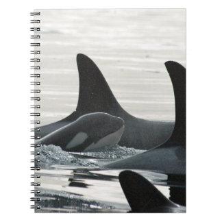 Orcafamiljanteckningsbok Anteckningsbok