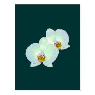 Orchid de MUSEUMZazzle gåvorna Zurich 2000 Vykort