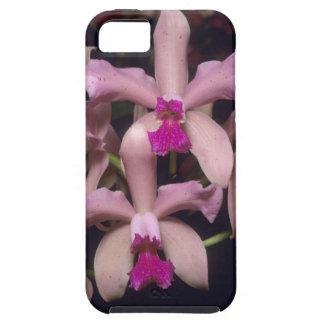 Orchid (den Cattleya amethystoglossaen), östra iPhone 5 Cover