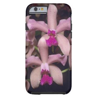 Orchid (den Cattleya amethystoglossaen), östra Tough iPhone 6 Skal