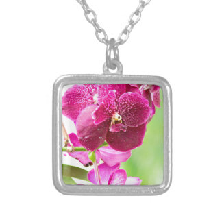 orchid silverpläterat halsband