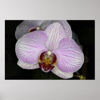 Orchidblomma