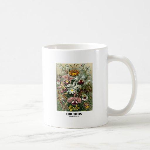 Orchids (Artforms av naturen) Muggar