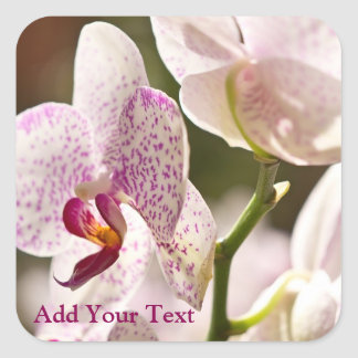 Orchids av Shirley Taylor Fyrkantigt Klistermärke