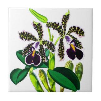 Orchids Liten Kakelplatta