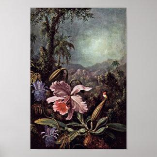 Orchidspassionblommor och Hummingbirds av Martin Poster