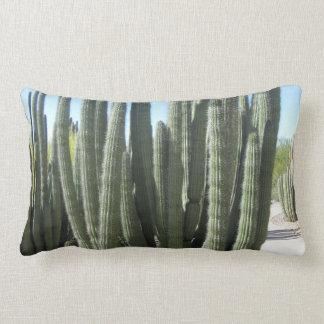 Organ leda i rör kaktusen kuddar