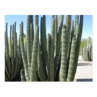 Organ leda i rör kaktusen vykort