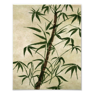 Orientalisk bambu 1 för vintage fototryck