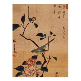 Orientalisk Camellia och sångare Vykort