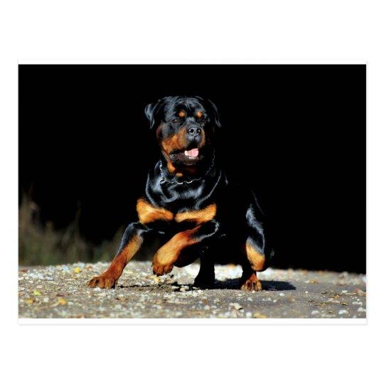 Original Rottweiler Postcard Vykort