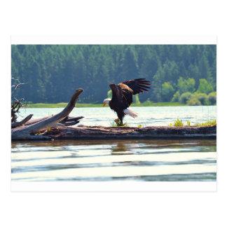 Örnen Vykort