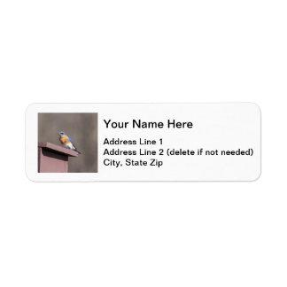 Östlig blåsångare returadress etikett