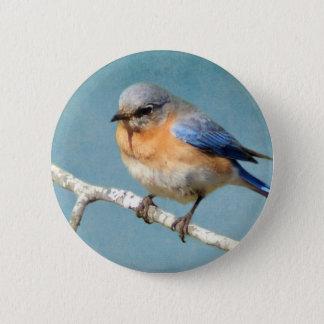 Östlig blåsångare standard knapp rund 5.7 cm