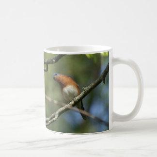Östlig blåsångaremugg kaffemugg