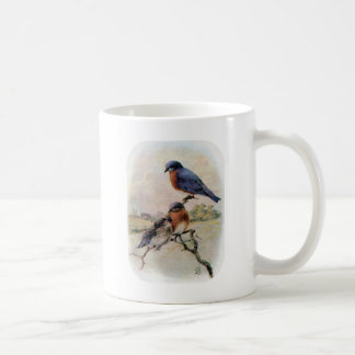 Östlig bluebirds med babyfågeln kaffemugg