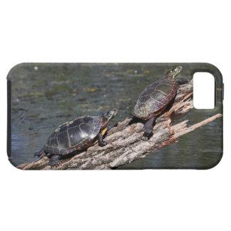 Östra målad sköldpadda iPhone 5 cases