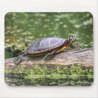 Östra målad sköldpadda musmatta