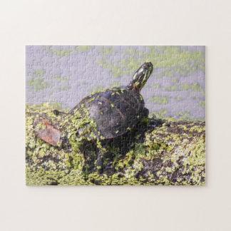 Östra målad sköldpadda pussel