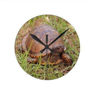 Östran boxas sköldpaddan (North Carolina och Rund Klocka