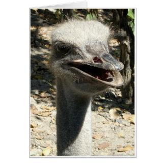 Ostrich Hälsningskort