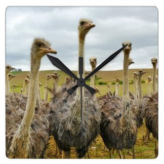 Ostrichfågel Fyrkantig Klocka