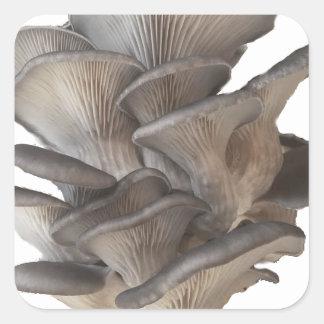 Ostronchampinjon Fyrkantigt Klistermärke