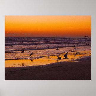 Ottan rusar av fåglar på havkanten poster