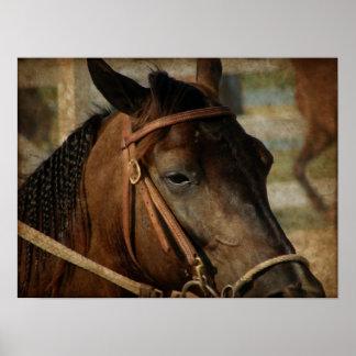 På hästshowen poster